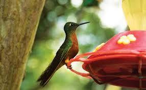 Resultado de imagem para amazonia brasileira fauna e flora