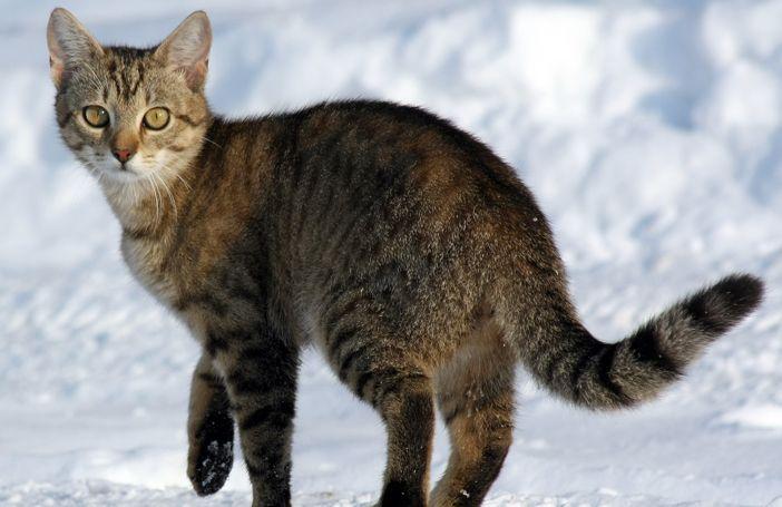 Katten zijn en blijven bijzondere wezentjes. Sommigen poseren graag net als pin-up dames en andere beestjes knuffelen het liefst 24/7 met een zoutlamp. Tot zover vertellen we je misschien niets nieuws. Maar… Wist jij dat katten ook volledig wild kunnen worden van de natuur?! De 14 katten hieronder maken voor een eerste keer sneeuw mee …