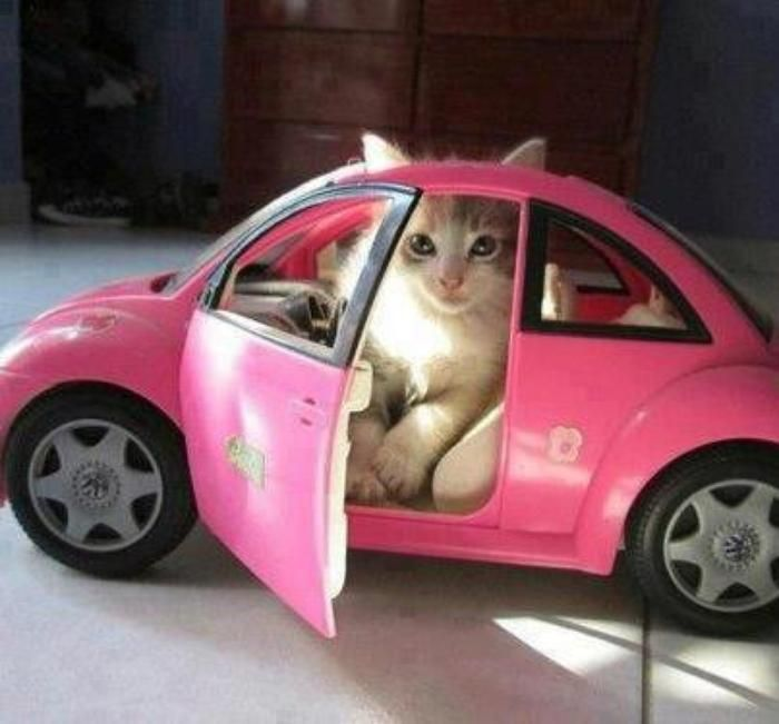 272 Best Images About Cars On Pinterest: 21 Best Images About Cats In Cars On Pinterest