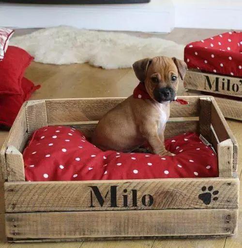 DIY Hundebett aus Holzkisten bauen