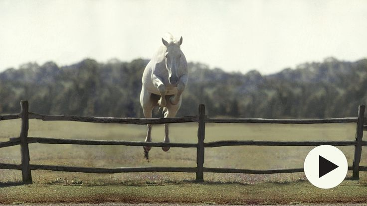 'Harry & Snowman' Snowman was saved by Harry from slaughter, for a mere $80.00 in 1956. Watch what this horse, and Harry accomplished.