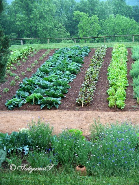 Monticello vegetable garden the ultimate kitchen garden for Beautiful vegetable garden designs