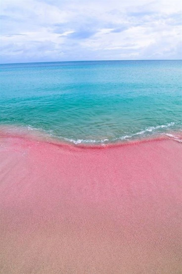 幻の砂浜「ピンクサンドビーチ」 / バハマ