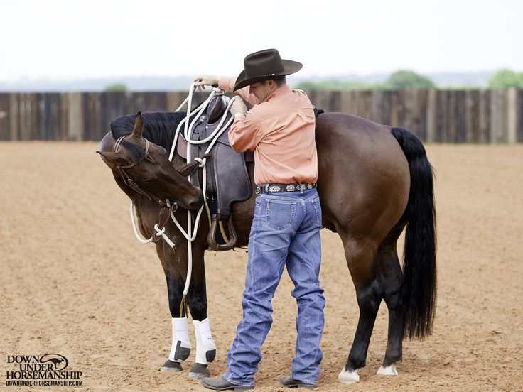 Riding Exercise #1: Flex With the Bridle on the Ground  Goal: Before I mount, I'll always flex the horse a few times on both sides with the bridle to make sure he's soft and paying attention. If he's stiff and resistant on the ground, he won't be any better under saddle.  More about the exercise: https://www.downunderhorsemanship.com/Store/Product/MEDIA/D/252/