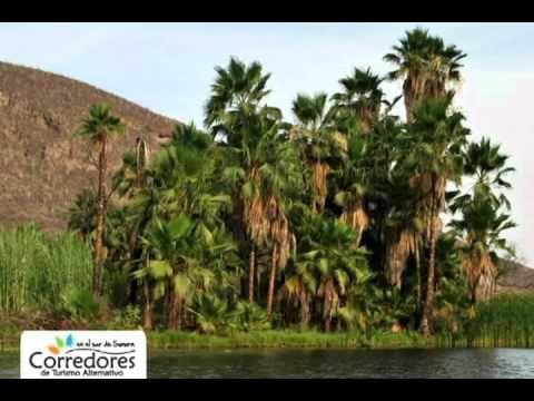 Descubre todo lo que los Corredores de #Turismo Alternativo en el Sur de #Sonora tenemos para ofrecerte...