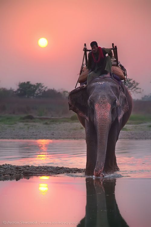 Sunset in India #travel: Buckets Lists, Travel Tips, National Parks, India, Elephants Riding, Places, Riding An Elephants, Pink Elephants, Animal