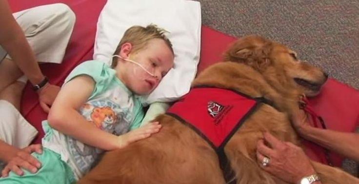 Après une collision frontale qui l'a laissé avec des os cassés et une lésion cérébrale traumatique, les parents de Caleb ne savaient pas comment il allait être en mesure de guérir rapidement. Mais avec l'aide d'un chien très spécial de thérapie, les