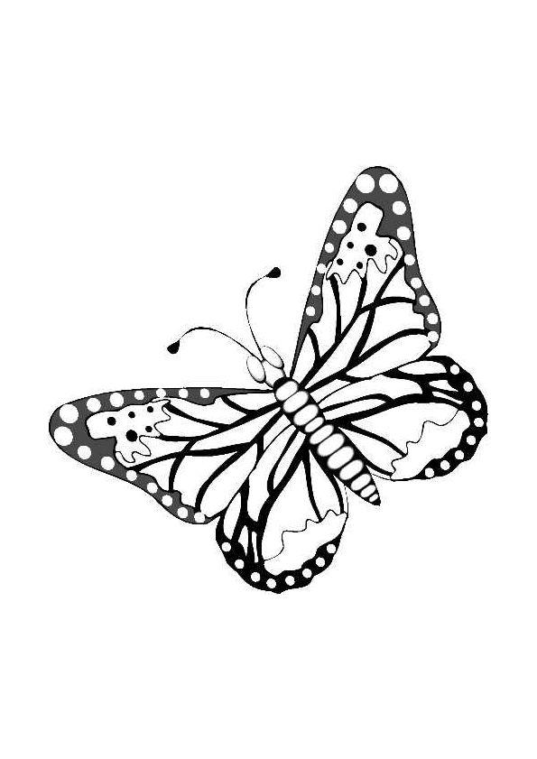 Illustration très réaliste d'un papillon, à colorier | Coloriage papillon, Coloriage, Comment ...