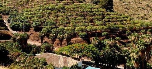 Ruta de senderismo por el Valle Tropical de Río Verde