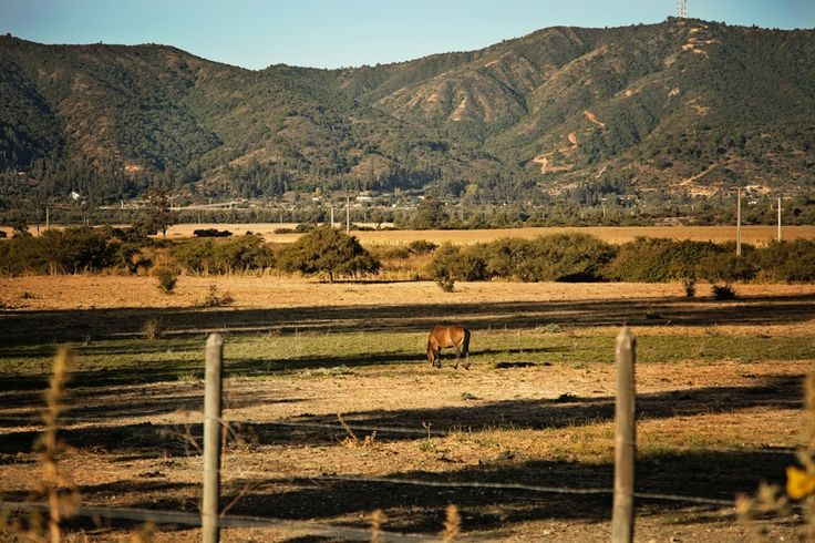 Horses grazing across the road from the Casa Patronal