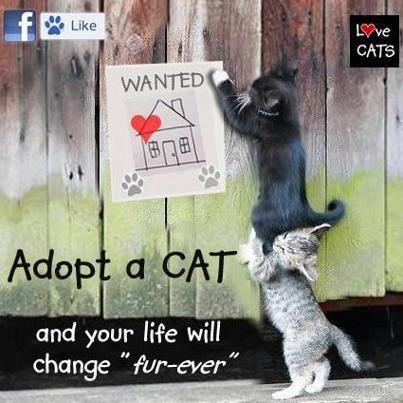 ;)  Grayson County Humane Society/ SPCA on FB