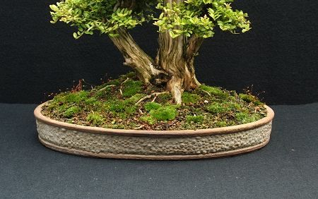 bonsai pots | bonsai pot