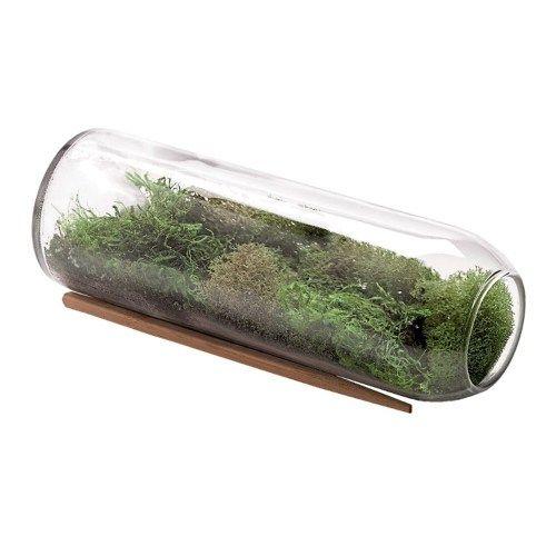 Miniature Moss Garden - Christmas gifts for boss.