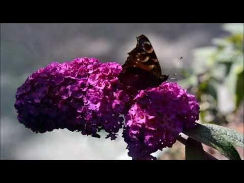 Etiuda Motyl – Amazing World
