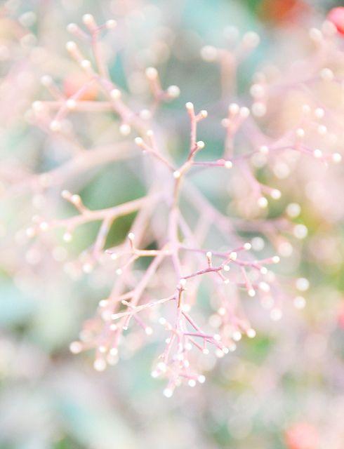 soft pink foliage