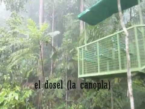 Un viaje virtual al bosque lluvioso de Panamá