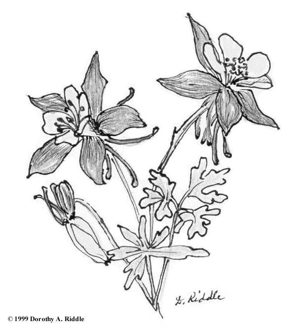 123 Best Flowers Drawings Of Orchids Images On Pinterest