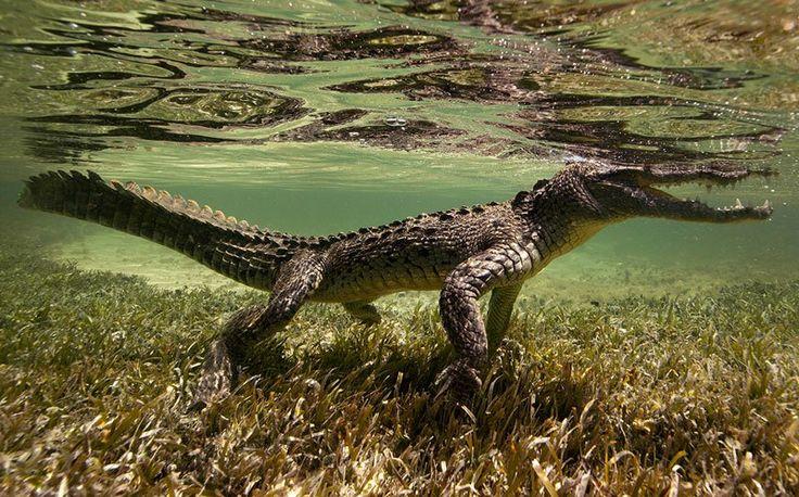 Spectacular Underwater Images , FISH SAYCHEESE , JORGE CERVERA HAUSER , MÉXICO PELÁGICO , PELAGIC LIFE