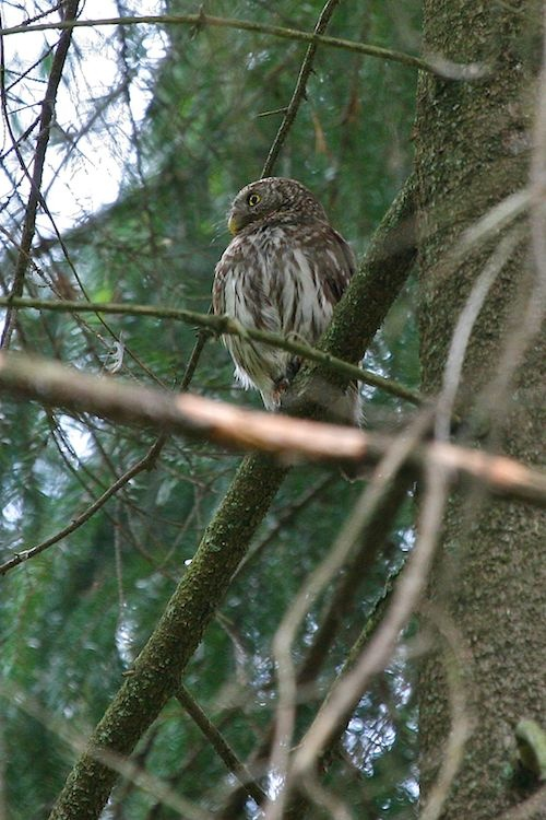 Image detail for -Birding in the Białowieża Forest – photoreport | Wild Poland