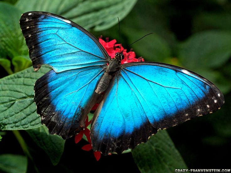 Best Wallpapers Images On Pinterest Amazing Nature Beauty Of - Butterfly wallpaper for computer desktop