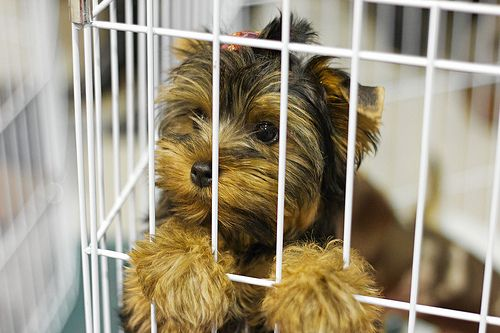 How do you know if your pet comes from a puppy mill? Read our list of puppy mill red flags to learn how to recognize the warning signs.