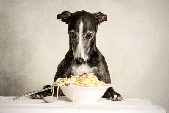 De hond op deze foto is een windhond. Haar naam is Zoë en ze is een Whippet. Ze houdt erg van model staan en met veel geduld en oefening maken we samen de mooiste foto's. Zoë is een zeer vriendelijke en lieve hond. Ze houdt van mensen en knuffelt graag de hele dag! Naast het sporten zoals frisbee en rennen staat Zoë ook heel graag model voor mooie en bijzondere foto's!FotoMelle fotografie maakt bijzondere foto's van honden. Werk voor thuis aan de muur, in restaurants, hotels,  wac...
