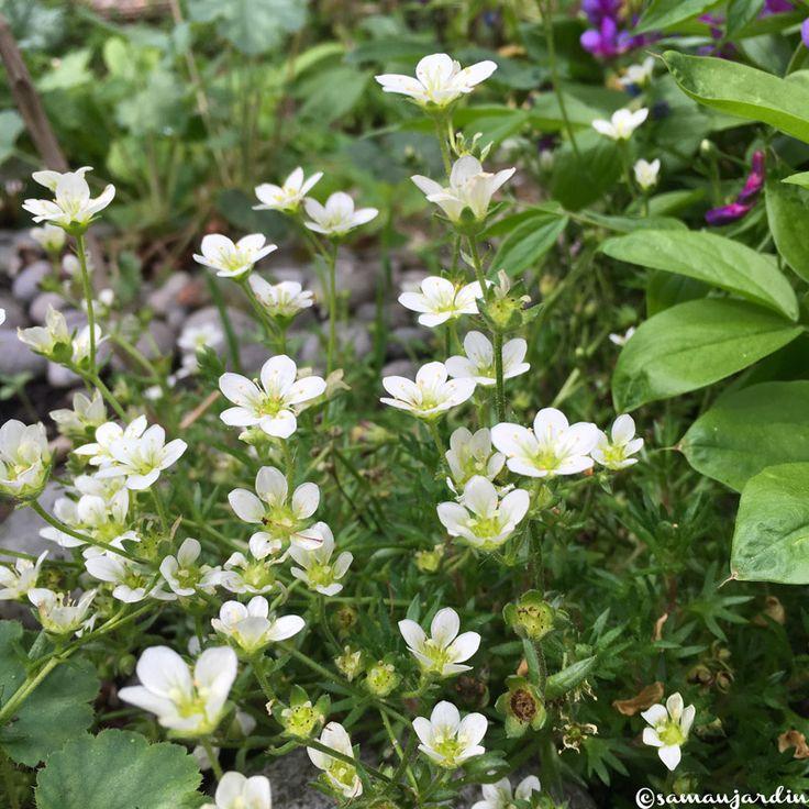 WordPress » Erreur | Fleurs de mai, Jardins, Fleurs