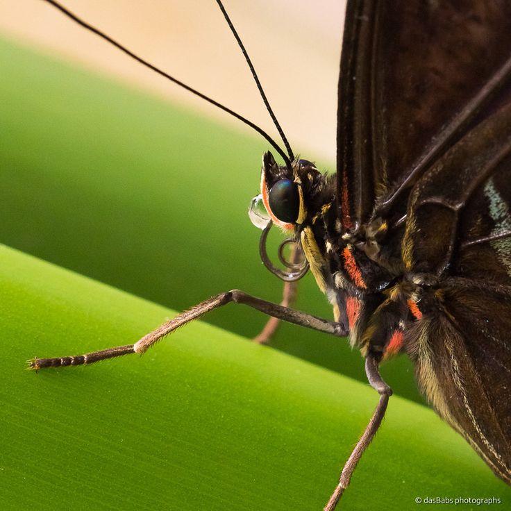 Schmetterling 2 by Babs Helferich on 500px