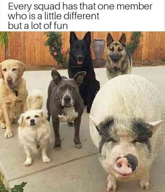 23 Funny Animal Pictures Of The Day. Every squad has a member who's a little different. Enjoy RUSHWORLD boards,  LULU'S FUNHOUSE, UNPREDICTABLE WOMEN HAUTE COUTURE and WEDDING GOWN HOUND.  Follow RUSHWORLD! We're on the hunt for everything you'll love!