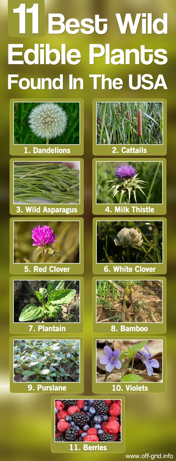 11 Best Wild Edible Plants Found In The USA►►http://off-grid.info/blog/11-best-wild-edible-plants-found-in-the-usa/?i=p