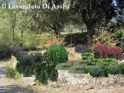 progetto giardino con muretto in pietra - Cerca con Google