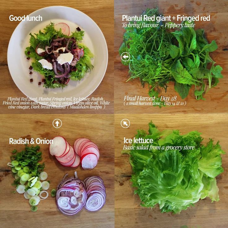 Good lunch – Final harvest on Plantui Giant red & Fringed red - 28 days. First Height blog – Day 6 / Second Height block – Day 16.