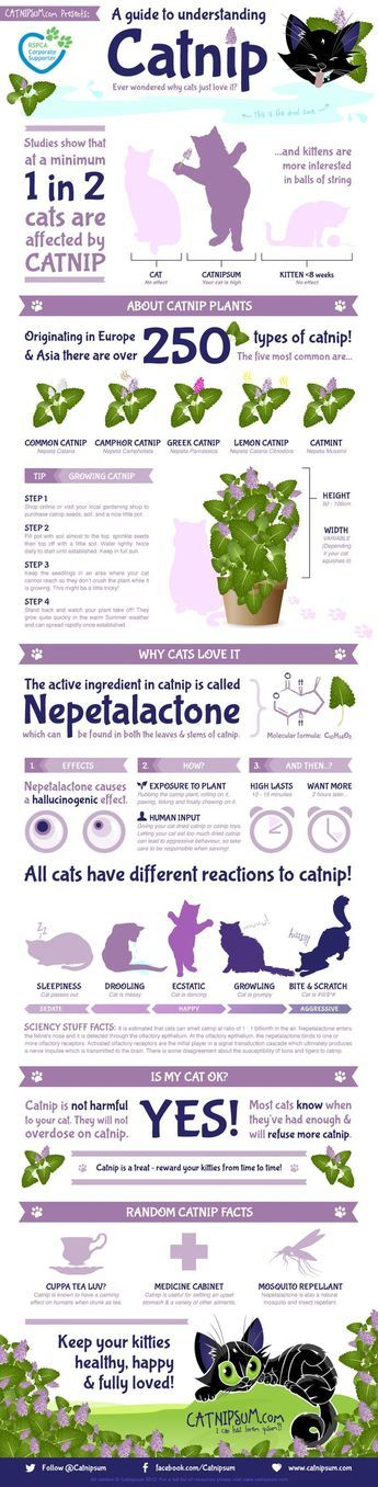 Many cats go crazy for catnip, while others couldn't care less. In this infographic from Catnipsum.com, find out more information on this plant that has some kitties going a little wacky.