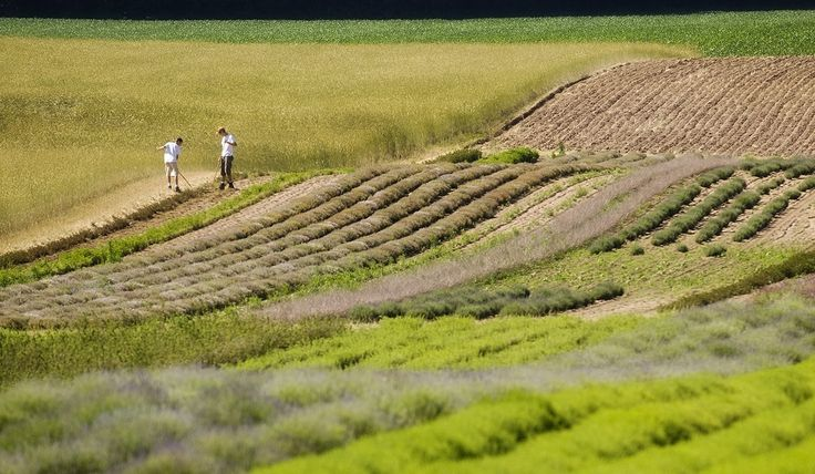 Young local boys working out in the herb fields at Heritage Line Herbs.
