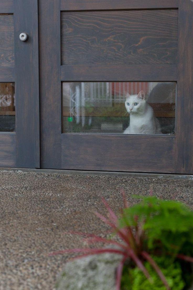 玄関事例:猫が迎えてくれる玄関(船橋・猫と暮らす家)