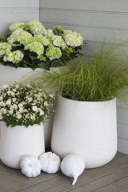 Hvite delikate potter passe fint ute om høsten.