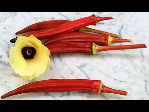 how to grow red okra  how do you plant okra  okra vegetable  part 2 urdu...