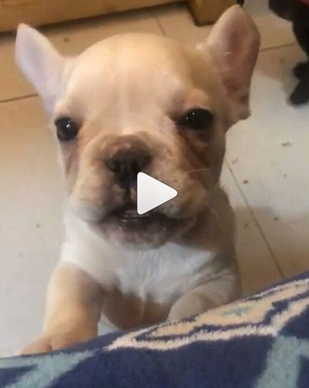What Are You Talking About Cutepuppy Cutepuppyvideo
