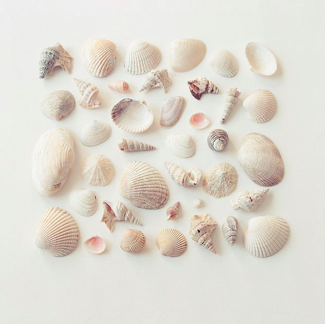 beautiful!!! sea shell collection