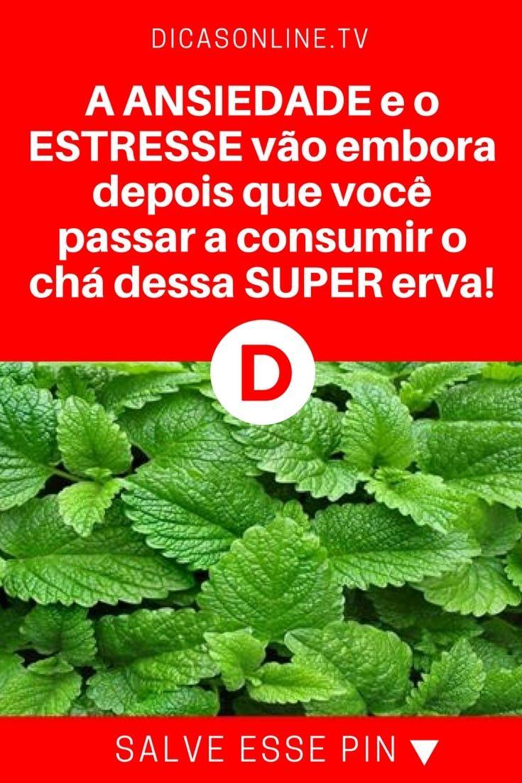 14f3f133b Erva-cidreira  remédio natural para combater 5 doenças