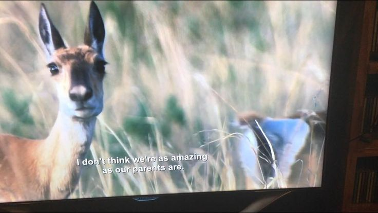 A friend was  watching some BBC nature show on Netflix, and a glitch on Netflix cause it to have Aziz Ansari's stand up special's subtitles.