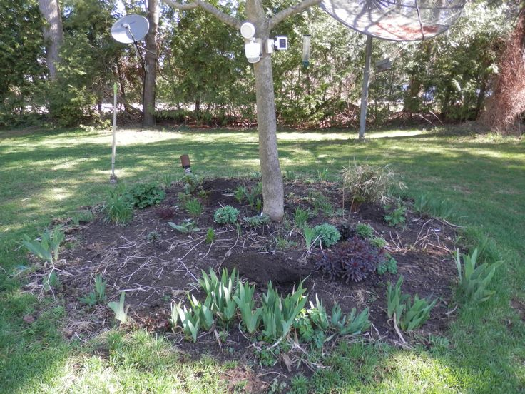 early spring perennial bed
