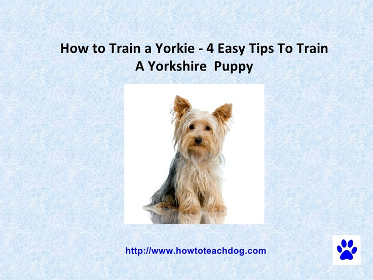 how-to-train-a-yorkie-4-easy-tips-to-train-a-yorkshire-puppy by Avril  Benton via Slideshare