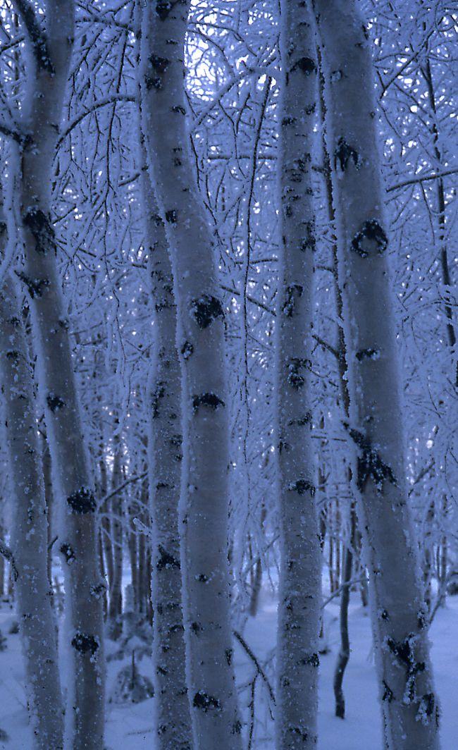 Aamu huurrettaMorning Frostphoto by Erkki Vilpa