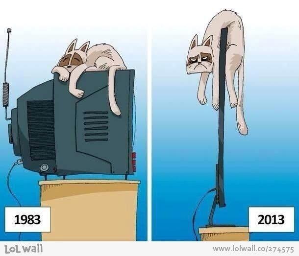 Kedilerin çilesi karikatür