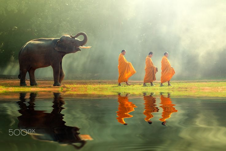 Monk and young elephant - Monk alms round and young elephant