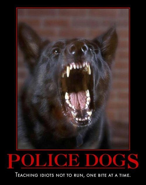 28 best images about Police Dog Humor on Pinterest | 5 ...