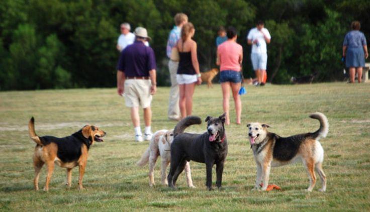 Dog friendly Charleston things to do!