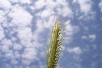 Health+Benefits+of+Barley+Water+