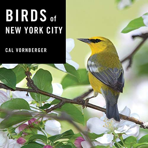 Download Pdf Birds Of New York City Free Epub Mobi Ebooks New York City New City Bird Species
